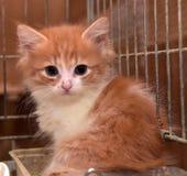 Röd kattunge i en bur royaltyfria bilder