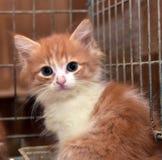 Röd kattunge i en bur arkivfoto