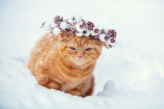 Röd kattunge i en julkrans arkivfoto