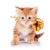 Röd kattunge med en guld- pilbåge. Arkivbilder