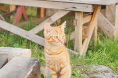 Röd kattunge som ser till sidan Arkivfoto