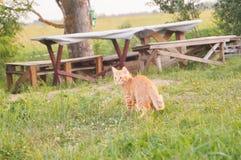 Röd kattunge som ser till sidan Arkivfoton