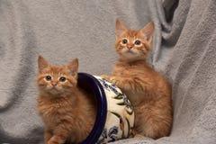 Röd kattunge två och en blomkruka royaltyfri foto