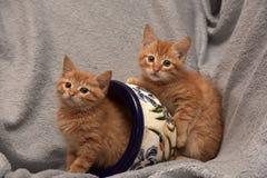 Röd kattunge två och en blomkruka royaltyfria bilder