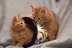 Röd kattunge två och en blomkruka arkivfoton