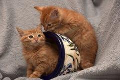 Röd kattunge två och en blomkruka royaltyfria foton
