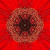 Röd koncentrisk blommamitt. Mandala Kaleidoscopic design Royaltyfri Foto