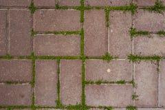 Röd konkret tegelplatta på den jordbakgrunden för textur för modell för trottoarbanaabstrakt begrepp med gräs royaltyfri foto