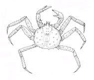 Röd konung Crab Svartvit illustration för översikt stock illustrationer
