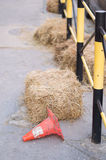Röd kotte Royaltyfri Fotografi