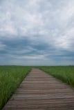 Röd-krönad Crane Nature Reserve planka Zalong Fotografering för Bildbyråer