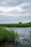Röd-krönade Crane Wetland Nature Reserve Zhalong Fotografering för Bildbyråer