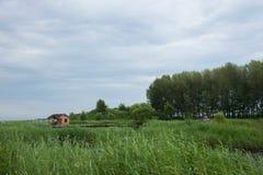 Röd-krönade Crane Wetland Nature Reserve Zhalong Royaltyfri Fotografi