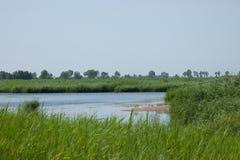 Röd-krönade Crane Wetland Nature Reserve Zhalong Arkivbild