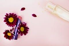 Röd läppstift i krysantemumblommor, doft Rosa bakgrund - utrymme för text Skönhet, skönhet och omsorg arkivbild