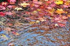 Röd lönnlöv på floden Arkivbild