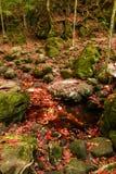Röd lönnlöv under fall Arkivbilder