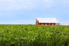 Röd ladugård i ett fält av sojabönor Royaltyfria Bilder