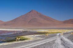 Röd Lake Arkivfoto