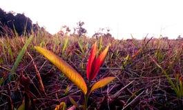 Röd leaf på jordningen royaltyfria bilder