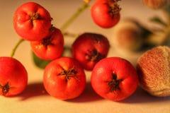 Röd liten art för frukt Arkivfoto