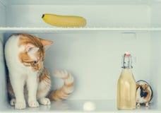 Röd liten kattunge som spelar med ägget i kylen med bananen och försökskaninen bak flaskan Närbild Royaltyfri Foto