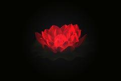 Röd lotusblomma isolerad svart Royaltyfri Bild