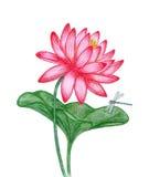 Röd lotusblomma med sländan Arkivbild