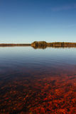 Röd lugna sjö och avlägsen skog Arkivbild