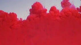 Röd målarfärg tappar ut blandning tack vare i vatten Färgpulvret krullas under vattnet Moln av färgpulver som isoleras på en vit