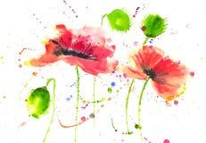 Röd målning för vattenfärg för stil för vallmoblommamodern konst Arkivbilder