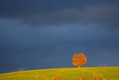 Röd mörk himmel Penobsquis för ensamt träd Arkivfoto