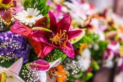 Röd magi för Hemerocallis Royaltyfria Bilder