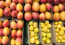 Röd mangofrukt i en ask Royaltyfria Bilder