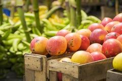 Röd mangofrukt i en träask Arkivbild