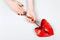 Röd manikyr med blomman royaltyfria foton