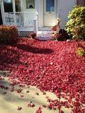 Röd matta på höstgångbanan Royaltyfri Foto