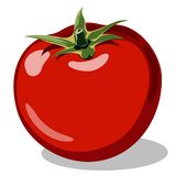 Röd mogen tomat Arkivfoton
