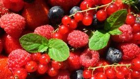 Röd mogen trädgårds- jordgubbe och blåbär, rotation av bär på den vita tabellen, härlig bakgrund lager videofilmer