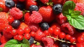 Röd mogen trädgårds- jordgubbe och blåbär, rotation av bär på den vita tabellen, härlig bakgrund, video ögla lager videofilmer