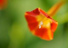 Röd morgonhärlighet Fotografering för Bildbyråer
