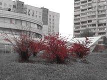 Röd Moskva, röd höst, rött intryck fotografering för bildbyråer