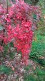 Röd natur Arkivbilder
