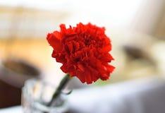 Röd nejlika Fotografering för Bildbyråer