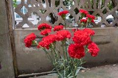 Röd nejlika-blomma ordning Arkivbild