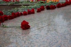 Röd nejlika på minnesmärken royaltyfria bilder