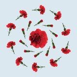 Röd nejlikablomma royaltyfri illustrationer