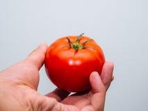 Röd ny tomat Royaltyfri Fotografi