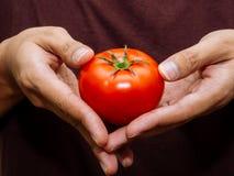 Röd ny tomat Arkivbild