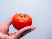 Röd ny tomat Arkivfoton